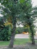 偷看通过树的日落 免版税库存图片