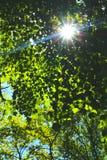 偷看通过树的旭日形首饰 免版税库存照片