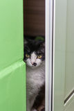 偷看通过门的猫 库存图片