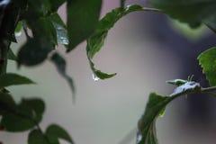 偷看从叶子 !!! 免版税库存图片