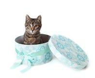偷看从蓝色礼物盒的镶边小猫 免版税库存图片