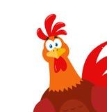 偷看从角落的逗人喜爱的红色雄鸡鸟动画片吉祥人字符 免版税库存图片