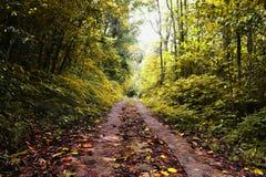 储备森林的秋天叶子 图库摄影