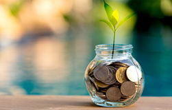 储款充分金钱硬币玻璃贪心 生长在储款硬币的植物 库存照片