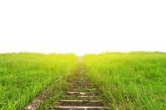 储蓄照片:在草甸和阳光的车道 自然设计 免版税图库摄影