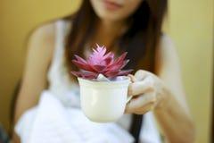 储蓄照片-妇女递拿着与花的一块玻璃 库存照片