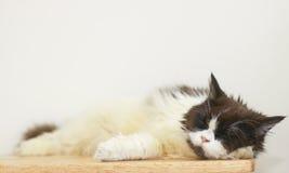 储蓄照片-摆在一只懒惰猫睡觉在地板上 免版税库存图片