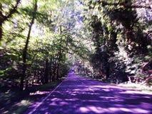 给催眠的路紫色树荫 库存照片