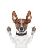 傻的疯狂的爪子上升狗 免版税库存照片