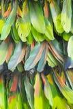 从僧人` s海角的羽毛的背景 图库摄影