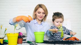 儿子帮助母亲植物花 种植夏天的家庭在色的罐开花 种植花的概念 股票视频