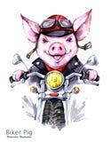 儿童例证 水彩在夹克的农庄猪在摩托车 滑稽的骑自行车的人 运输 2019年的标志 皇族释放例证