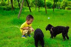 儿童和狮子狗 库存图片