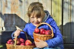 儿童在一个农场的采摘苹果在秋天 使用在苹果树果树园的小女孩 孩子在篮子的采撷果子 室外乐趣为 库存图片