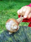 儿童在蜗牛的` s指点 与选择聚焦的图象 库存图片