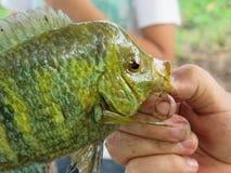 儿童手举行的绿色鱼 免版税库存照片