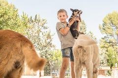 儿童狗使用 免版税库存照片