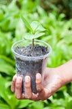 儿童现有量结构树 免版税库存图片