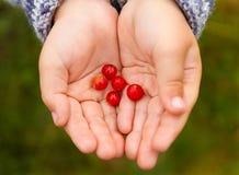 儿童的手用莓果 免版税库存图片