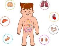 儿童的消化系统 库存图片