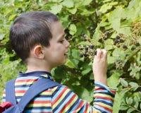 儿童采摘黑莓 免版税库存照片