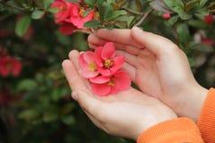 儿童` s递拿着一朵桃红色花,绿色灌木 免版税库存图片