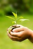 儿童` s递拿着年幼植物反对春天绿色backgr 免版税库存照片