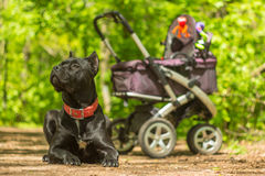 婴儿车和监护人狗在森林公园 库存照片