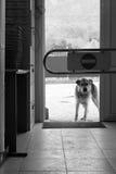 允许的狗没有 免版税图库摄影