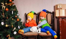 兄弟、姐妹和一只兔子在圣诞树附近 免版税库存照片