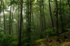 充分一个美好和神秘的森林风景沈默 免版税库存照片