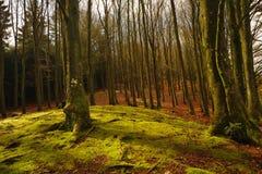 充分一个美好和神秘的森林风景沈默 免版税图库摄影