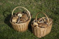 充分两个篮子蘑菇 库存图片