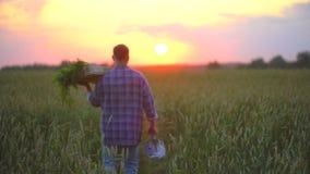 充分供以人员农夫运载的箱子、产物篮子有机菜,红萝卜在他的农场在日落或日出麦子 股票视频