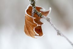 充分分支树冰 免版税图库摄影