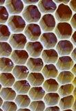 充分分群,蜂窝第一,新鲜的蜂蜜 库存照片