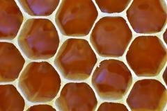充分分群,蜂窝第一,新鲜的蜂蜜 免版税图库摄影