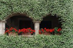 充分墙壁开花和fragant茉莉花 免版税库存图片
