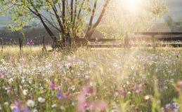 充分夏天草甸有在雨以后的雏菊的 免版税库存照片