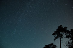 充分天空在树的星 免版税库存照片