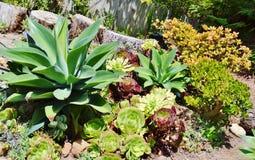 充分庭院五颜六色的仙人掌植物 库存照片