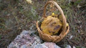充分柳条筐在自然背景的森林蘑菇 股票录像