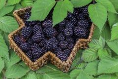 充分柳条筐黑莓 免版税库存图片