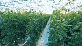 充分温室植物 股票录像