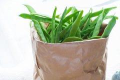 充分生态袋子豆类 库存照片