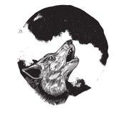 充分的嗥叫月亮狼 免版税库存照片