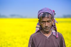 充分的开花的芥末领域的一位农夫在Sirajdhikha, Munshigonj,达卡,孟加拉国 库存图片