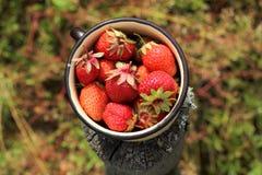 充分的杯子新鲜的草莓村庄 免版税库存照片
