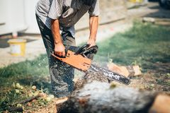 充分的防护齿轮切口木柴和木材的画象工作者在有一个专业锯的森林里 免版税库存照片