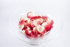 充分碗玫瑰花瓣 免版税图库摄影